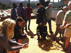 Everyone joined into the action of cleaning the corn off the cobs
